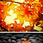 fallphotos 150x150 Photography