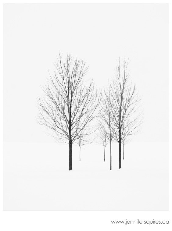 Winter trees photograph elviage pearl A Simple Christmas  Getting Festive