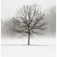 Winter trees photograph vanilla dream 200x200 Photography
