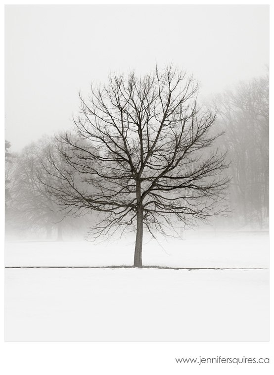 Winter trees photograph vanilla dream Landscape Photographs   Your Favourites in 2011