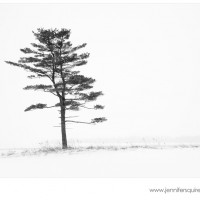 Winter Tree Photograph Porcelain Nest 027 200x200 Landscape Photography