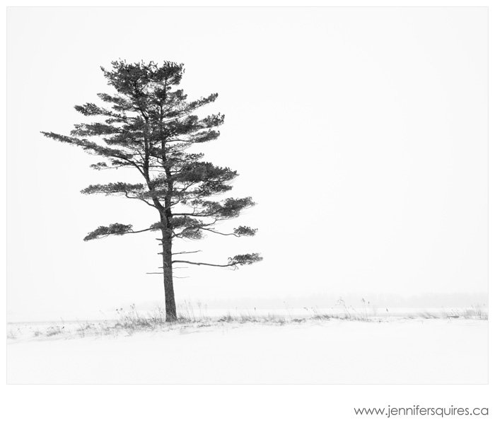 Winter Tree Photograph Porcelain Nest 027 Landscape Photographs   Your Favourites in 2012
