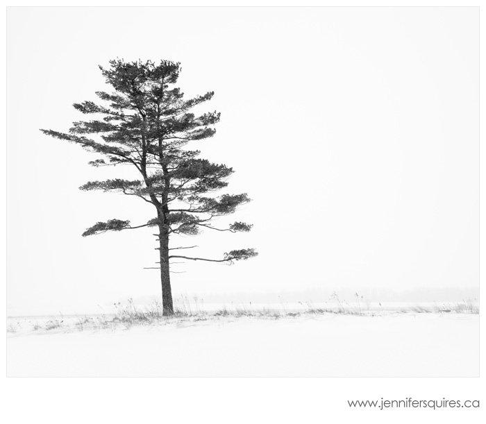 Winter Tree Photograph - Porcelain nest