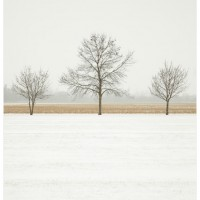 Trees in Winter Cornsilk Glaze Landscape Photograph 200x200 Photography
