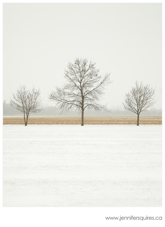 Trees in Winter Cornsilk Glaze Landscape Photograph A Simple Christmas   Feasting