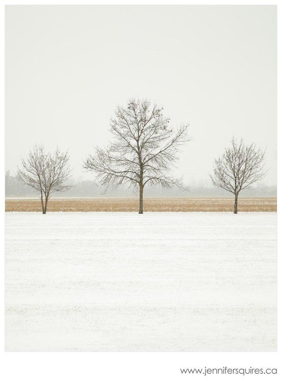 Trees in Winter Cornsilk Glaze Landscape Photograph A Simple Christmas   Feasting