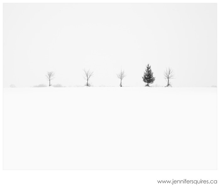 Trees in Winter The Brothers Nairn Landscape Photograph Trees in Winter   Nairn Road