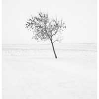 Frosty Gale Winter Landscape Photograph 200x200 Photography