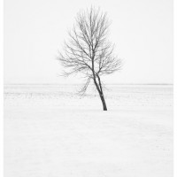 Tree in Winter Tend Landscape Photograph 200x200 Photography