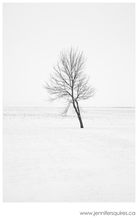 Tree in Winter Tend Landscape Photograph A Simple Christmas   Family
