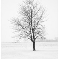 Winter Landscape Photograph Elder 200x200 Photography