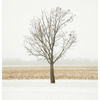 Winter Landscape Photograph Butterscotch Ripple 200x200 Photography