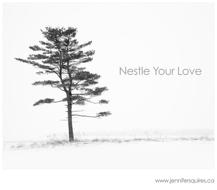 20120130 nairn 027 nestle your love blog Nestle Your Love