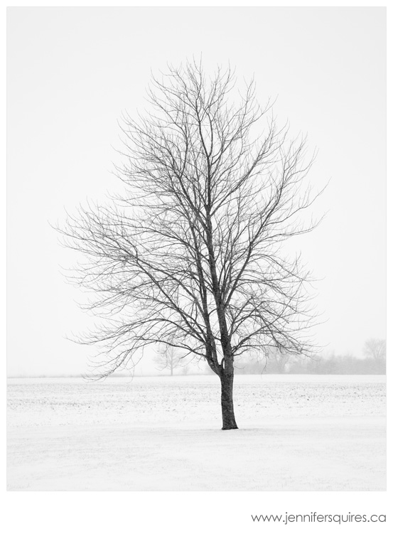 Winter Tree Landscape Photography - Elder