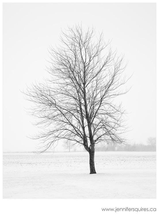 Winter Tree Landscape Photography - Elder
