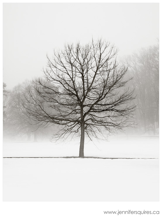 Winter Tree Landscape Photography Vanilla Dream A Simple Christmas  Christmas Parties