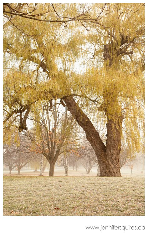 Landscape Photography An Unexpected Journey Foggy Landscapes   Gibbons Park