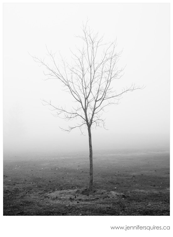 Fog Landscape Photography Fledgling Landscape Photography   A Foggy Season in London