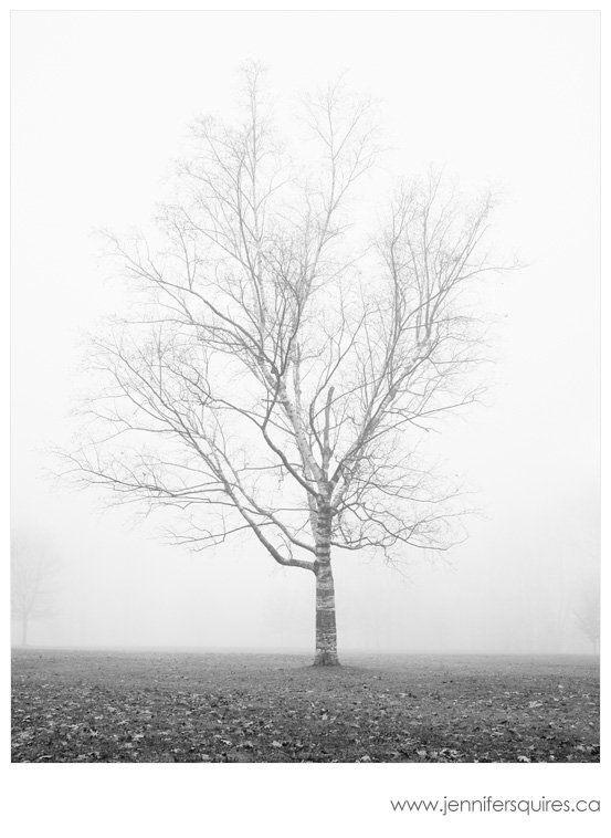 Fog Landscape Photography Morning Delight Landscape Photography   A Foggy Season in London