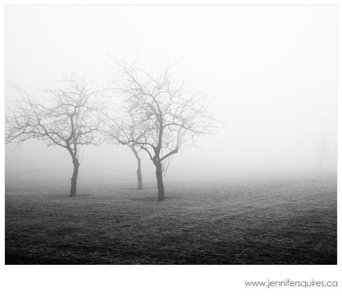 Fog Landscape Photography - Orchard Fog