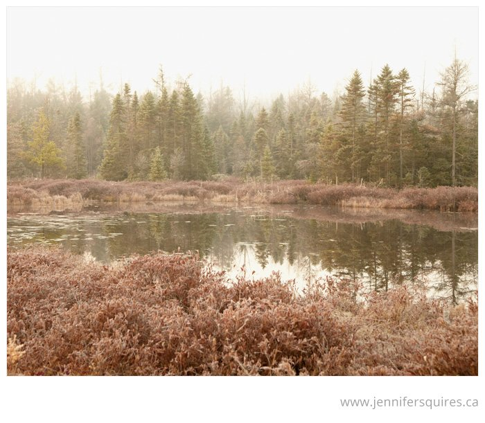 landscape photography london ontario canada sifton bog 011 Blushing Bog