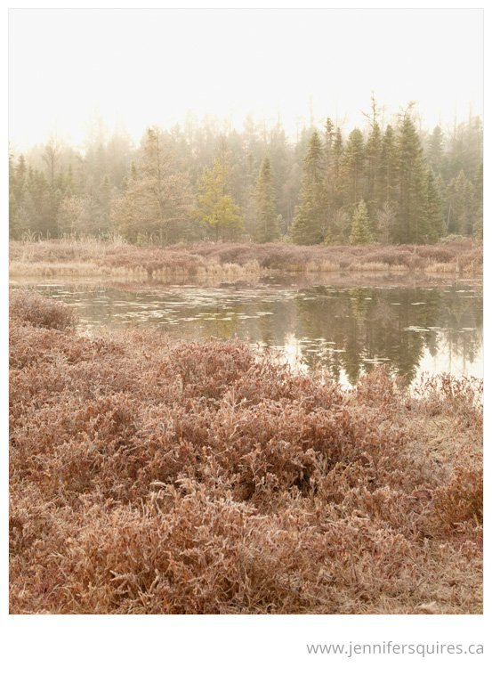 landscape photography london ontario canada sifton bog 018 Blushing Bog
