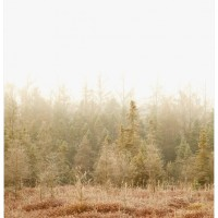 landscape photography london ontario canada sifton bog blushing bog 200x200 Photography