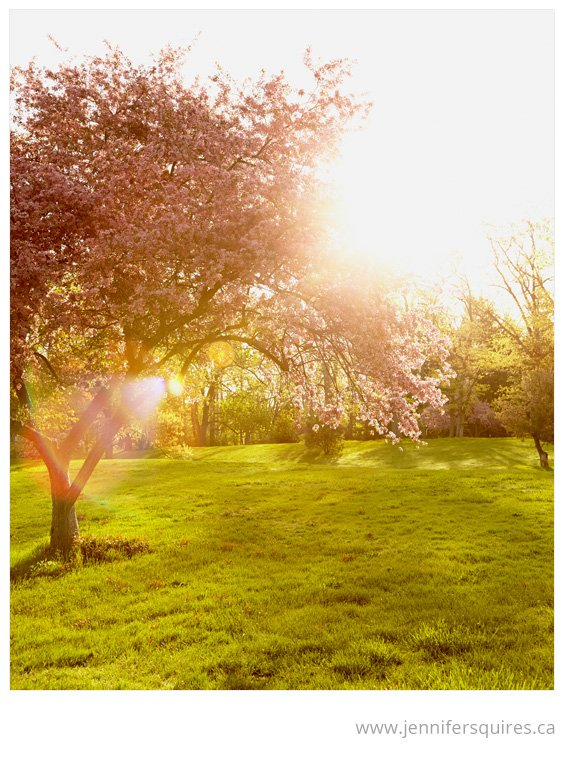 Nature Photography Gleaming Glory Spring Sunshine