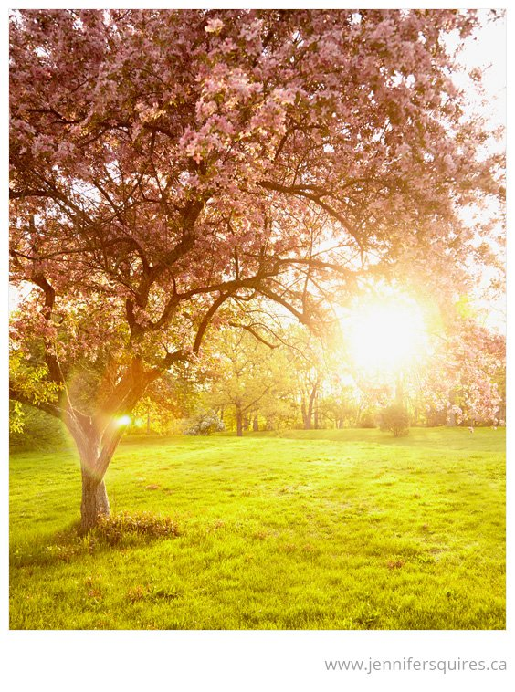 Nature Photography Mays Glow Spring Sunshine