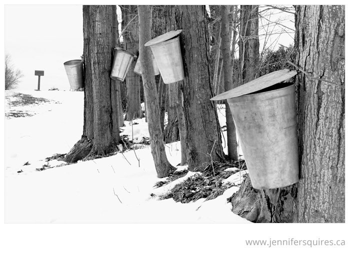 london ontario maple syrup Maple Syrup Love