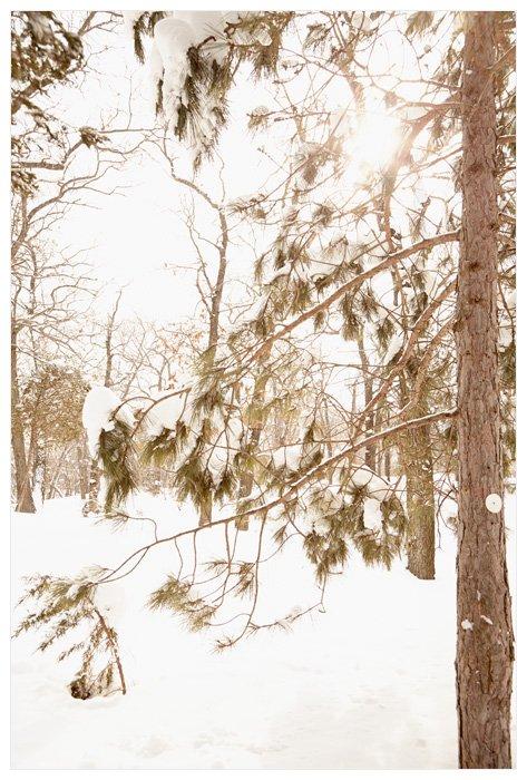 Winter Yurting - White Pine