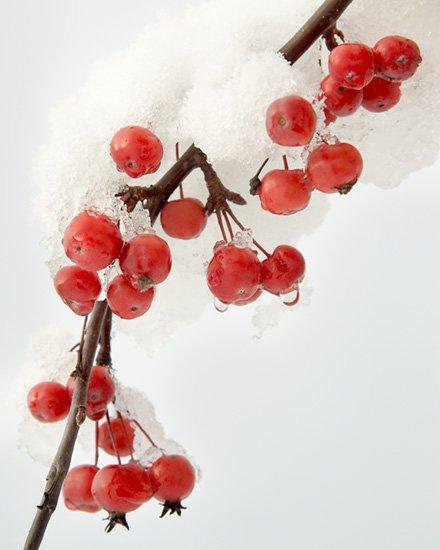 Frozen Winter Berries