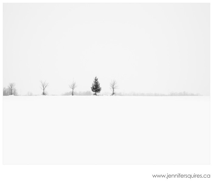 Trees in Winter - Nairn Five