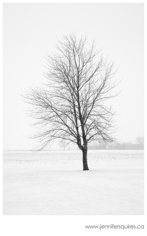 Winter Landscape Photograph - Elder