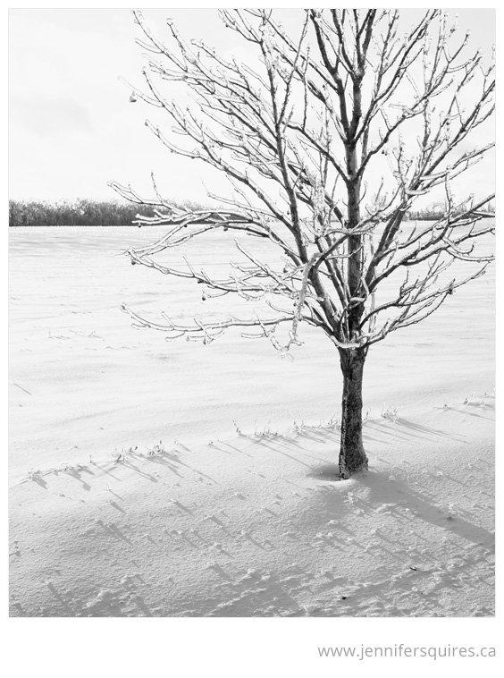 Tree Art - Shiver