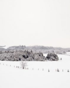 Winter Photography - Frosty Fields