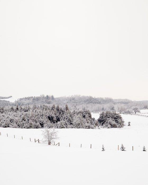 Winter Photography - Frosty Fields