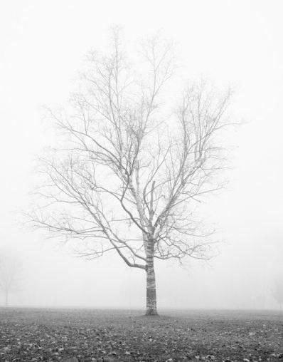 Birch Tree Art - Morning Delight