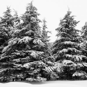 Winter Photography - North of Nine