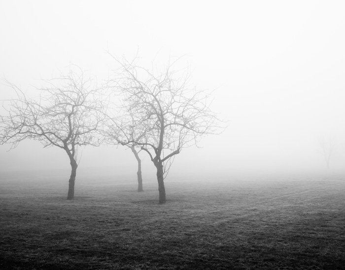 Nature Photography - Orchard Fog