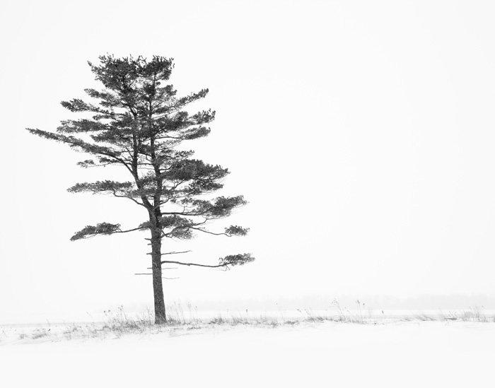 Winter Tree Art - Porcelain Nest
