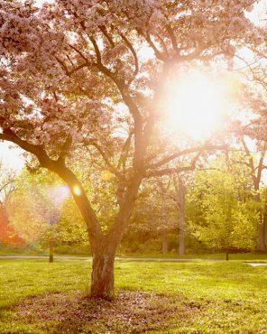 Pink Tree Wall Art - Spring Shine