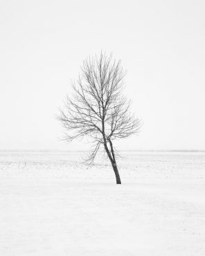 Black and White Nature Photography - Tend