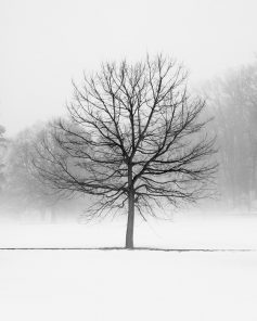 Black and White Tree Art - Vanilla Dream