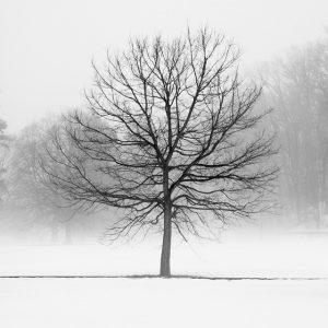 Winter Landscape Photography - Vanilla Dream - Black and White Tree