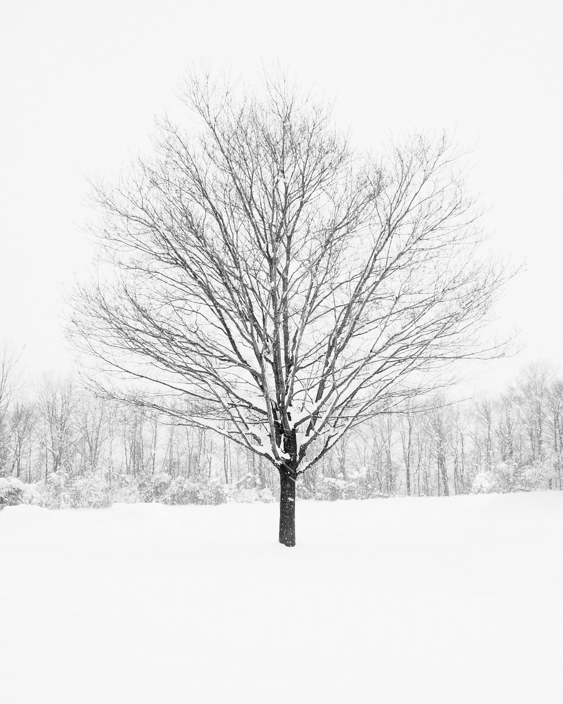 black and white tree prints tree in winter. Black Bedroom Furniture Sets. Home Design Ideas