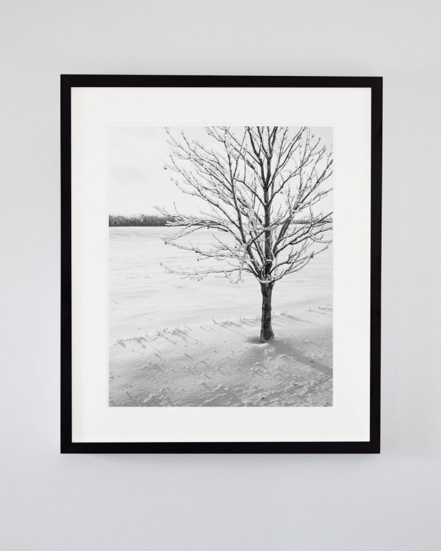 Black and White Winter Tree Photography - Shiver