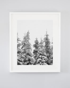 Snowy Trees Art - In The Treetops - Evergreens in Winter