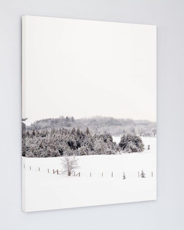 Frosty Fields - Winter Scene Photo