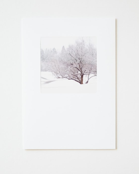 Winter Holiday Cards - Tangled Winter Web